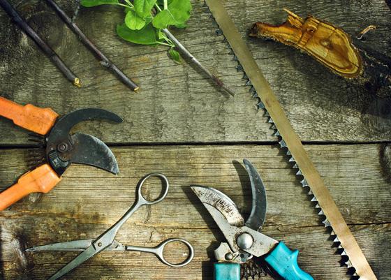 Легкий практикум для чайников: как правильно обрезать виноград на зиму, с чего начать, как сформировать и сколько убрать