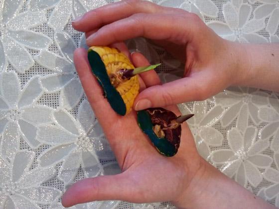 Гладиолусы: уборка и хранение луковиц, практические советы по выращиванию и хранению