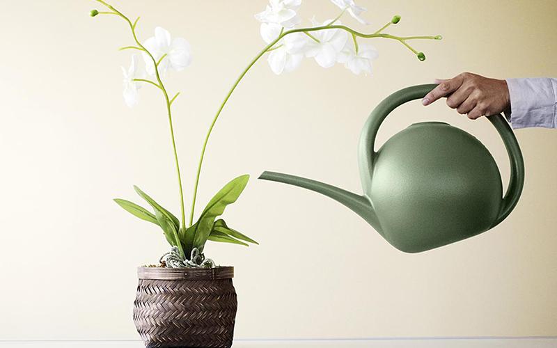 Прекрасная орхидея фаленопсис: уход в домашних условиях