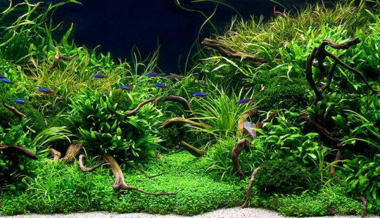 Аквариумные растения: фото с названиями и описанием, профилактика и лечение заболеваний