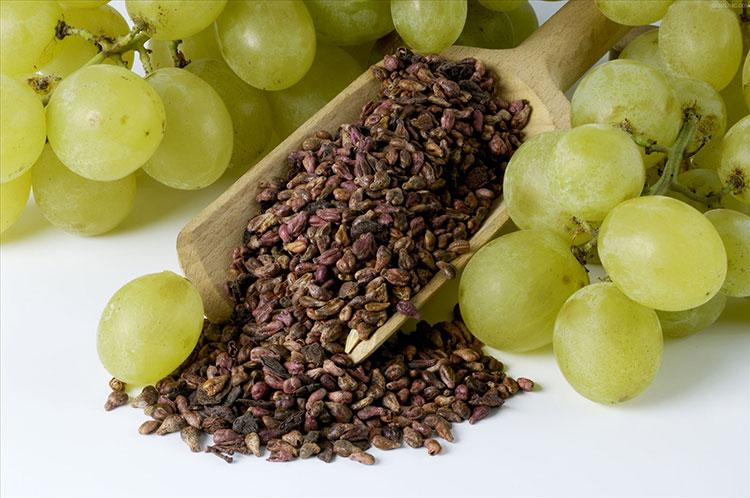 Виноград: польза и вред для здоровья организма