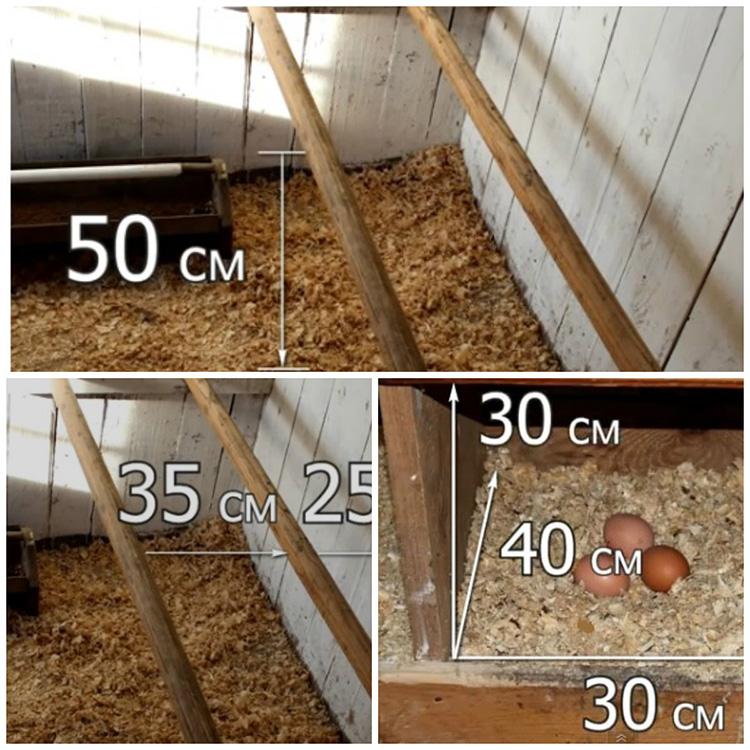 Как построить зимний курятник своими руками на 20 кур: следуем простой инструкции при постройке птичника
