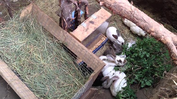 Разведение кроликов в домашних условиях для начинающих: выбор породы, способы содержания, размножение, борьба с основными заболеваниями