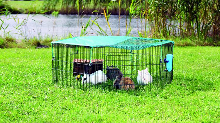 Разведение кроликов в домашних условиях для начинающих