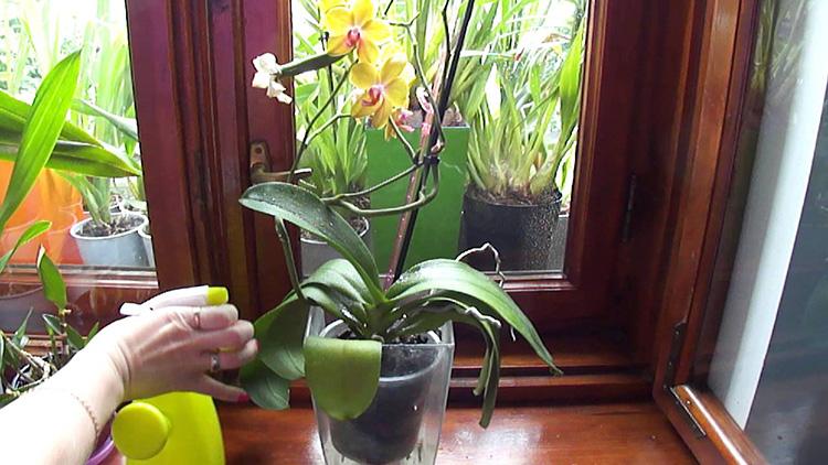 Мошки на комнатных растениях