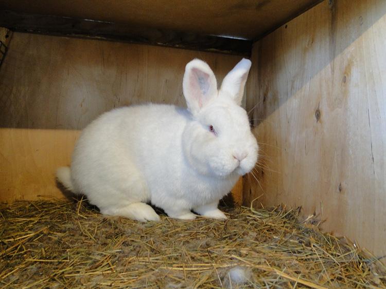 Выгодны ли кролики информация для начинающего кроликовода