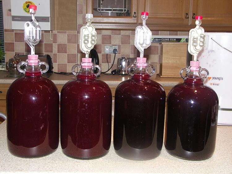 Вино домашнее из винограда Изабелла: особенности и технология приготовления, рецепты