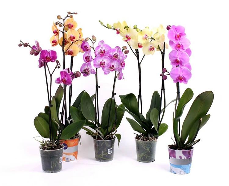 Уход за орхидеей