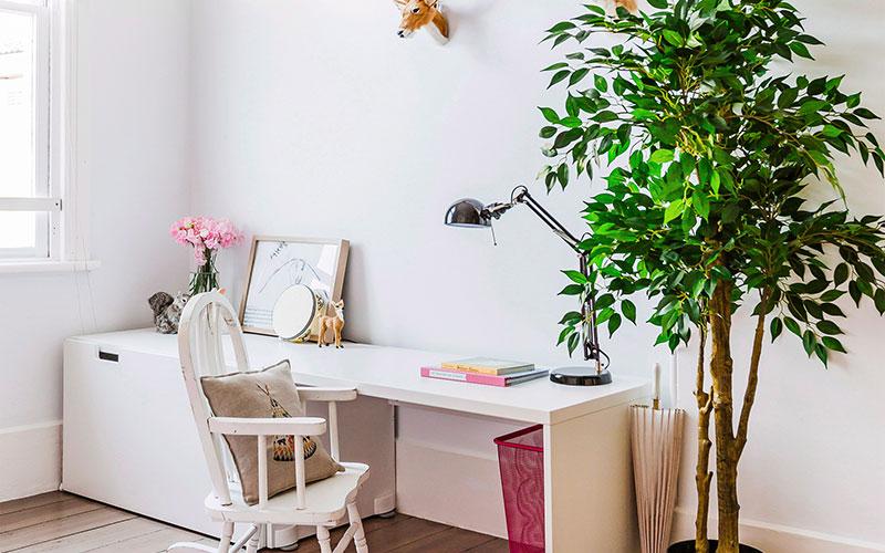 Правильный уход за фикусом в домашних условиях − сложно ли