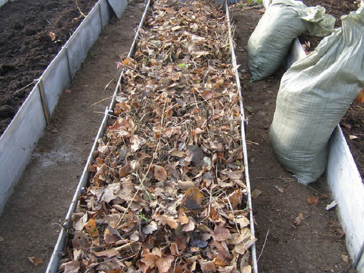 Как зимой выращивать огурцы: советы опытных садоводов