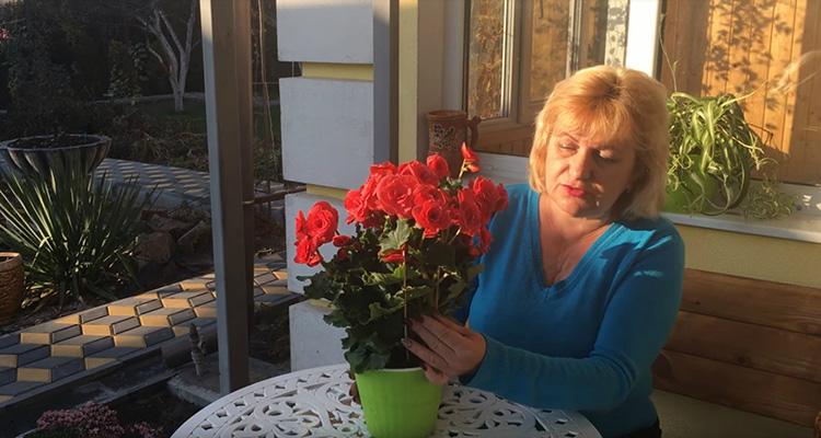 Бегония: уход в домашних условиях, фото растения и особенности размножения тропического цветка