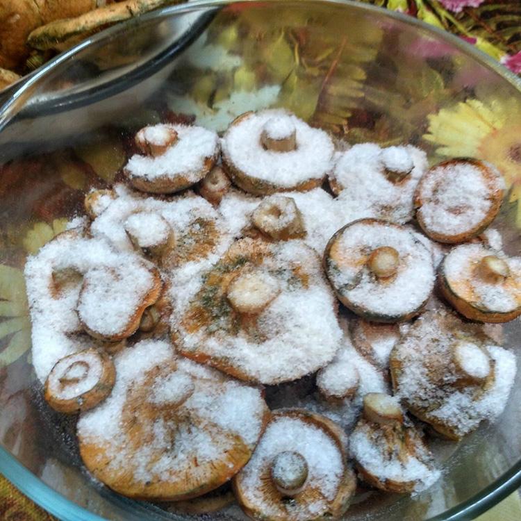 Полезная закуска для любого стола – грибы рыжики: описание, виды и фото