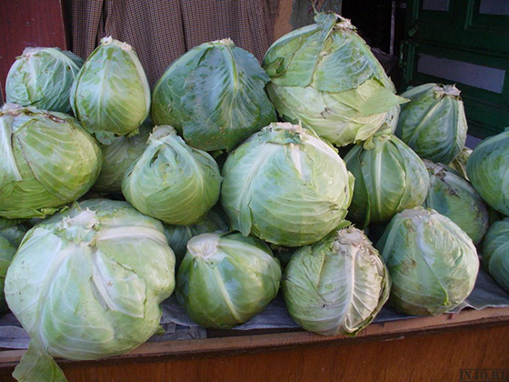 Витаминный резерв: как хранить капусту в погребе зимой