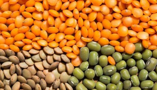 Полезные и вкусные бобовые. Чечевица: польза и вред для здоровья человека