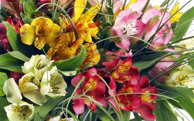 Как хранить цветы дома