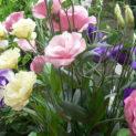 Эустома многолетняя: правила посадки и ухода, фото и описание цветка