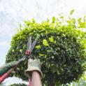 Лечим, не калечим, или Почему необходима обрезка плодовых деревьев и кустарников осенью