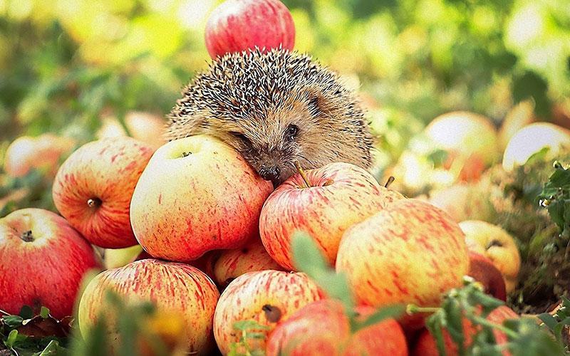 Калорийность яблока сезонного 1 шт