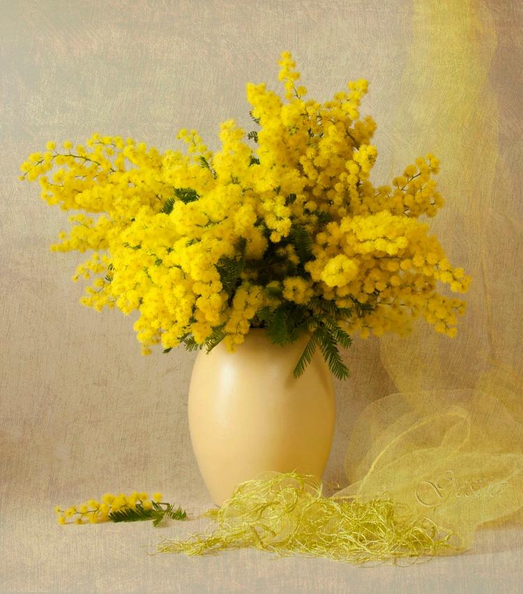 Белые розы, белые розы… Как лучше сохранить цветы в вазе, чтобы продлить жизнь букету