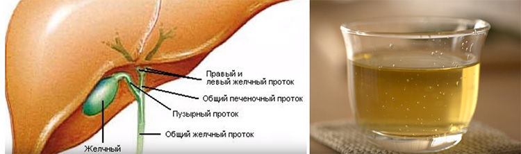 Птичья гречишка: фото, где растёт, как выглядит, полезные свойства