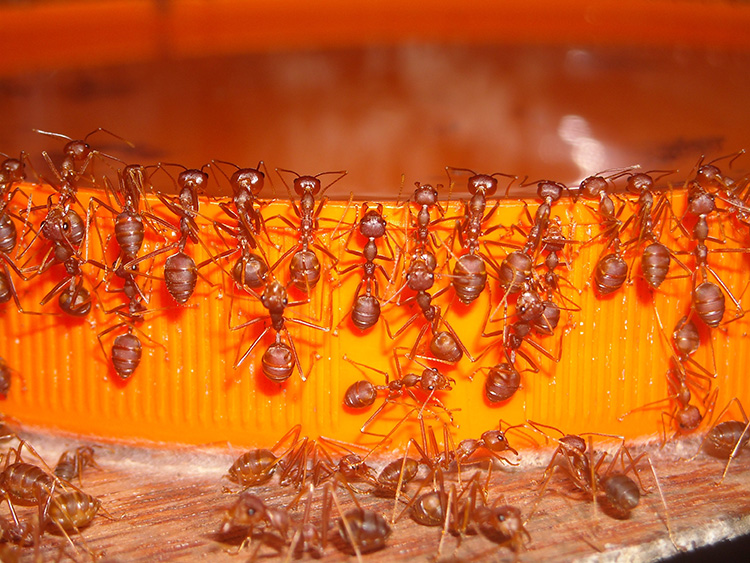 SOS – рыжие нарушители! Как раз и навсегда избавиться от муравьёв в квартире и загородном доме