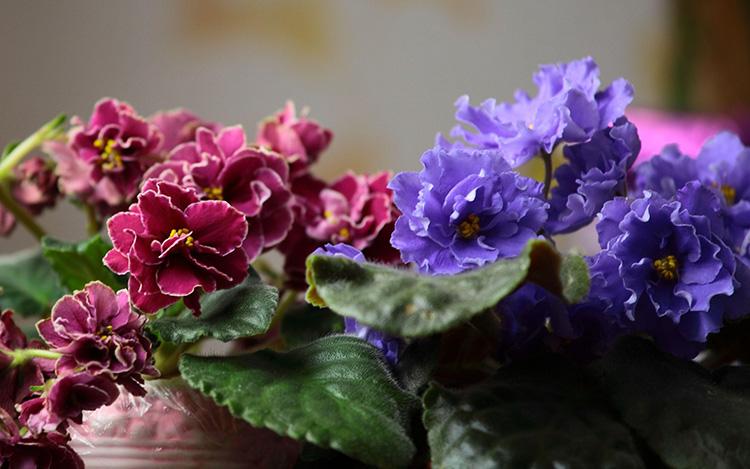 Скорая помощь для комнатных растений — янтарная кислота: как использовать в уходе за цветами, чтобы не навредить