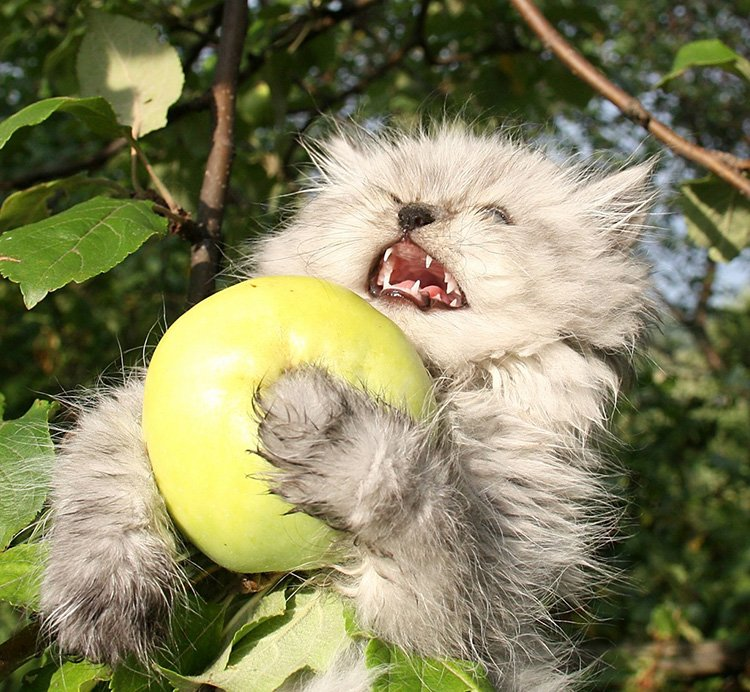 Ловушка для худеющих, или Сколько на самом деле калорий в яблоке