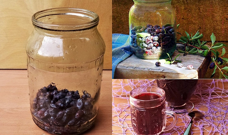 Вкусная ягода жимолость — полезные свойства и противопоказания
