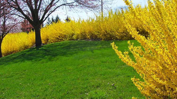 Какие кустарники бывают, и Как с помощью простых советов сотворить чудо на даче