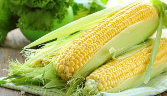 Кукуруза польза и вред для организма
