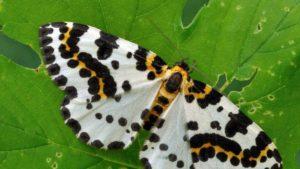 Бабочка, лист