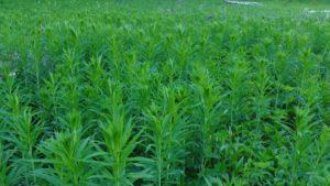 Луг, зеленые растения