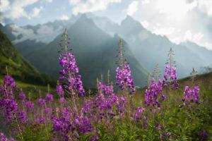 Растения, поле, горы