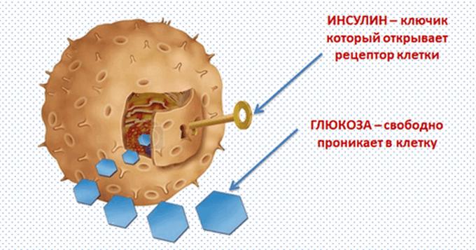 Как правильно принимать куркуму при сахарном диабете