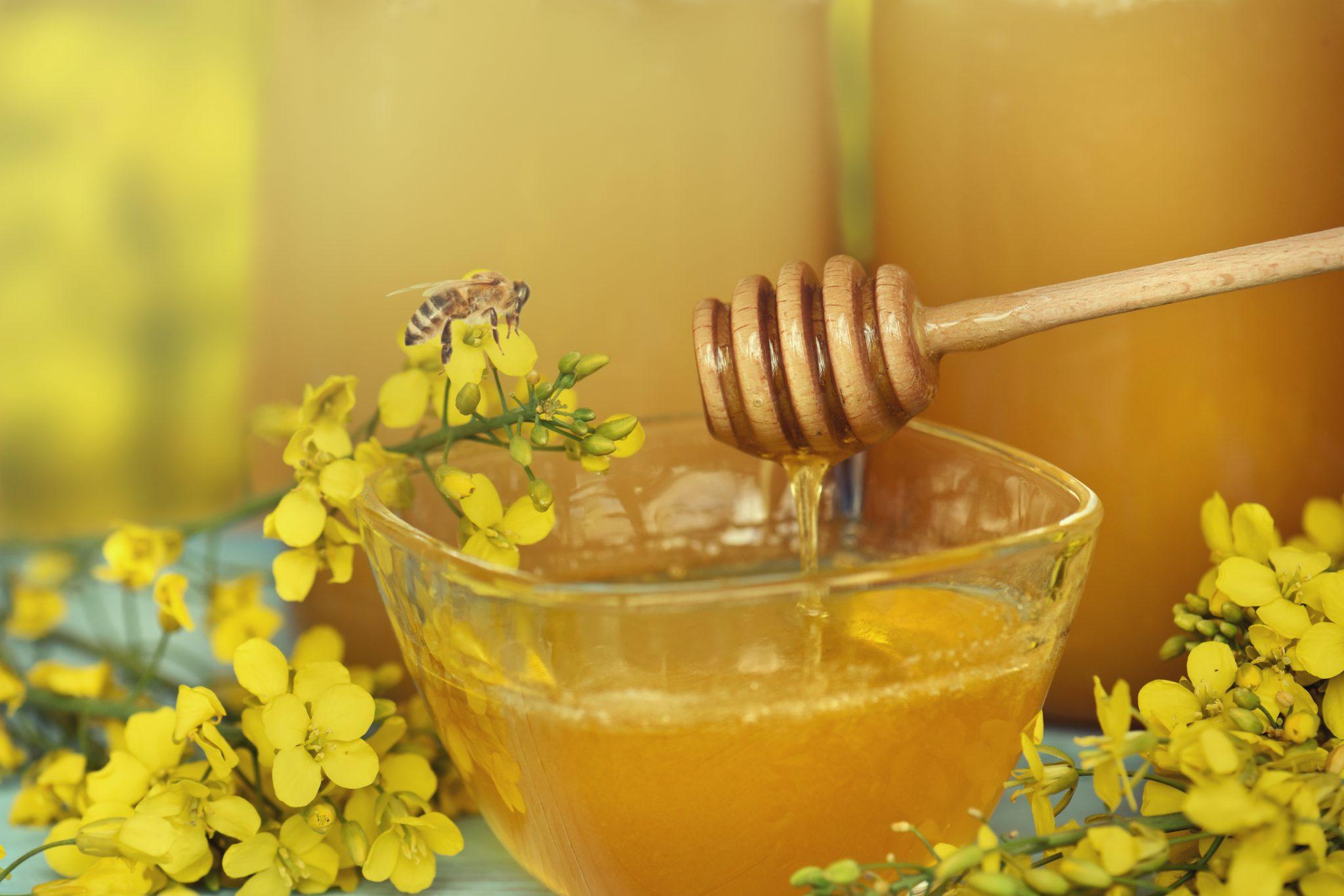 Мёд с репёшкой