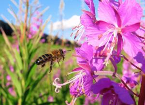 Пчела, луг, цветок