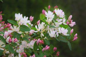 Белые цветки, ветка