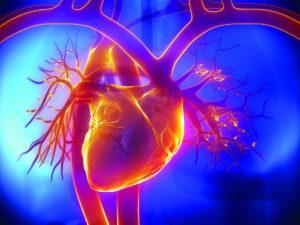 сердце, сосуды, артерии, вены