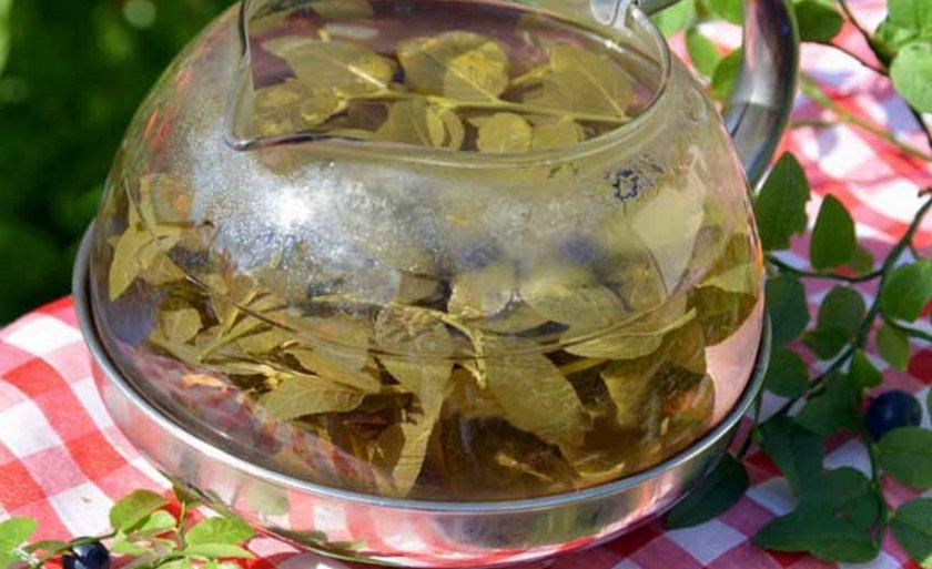Листья голубики настой