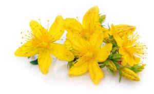 желтые цветы, мелкие листья зеленые