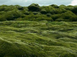 Луг, поле, зелень