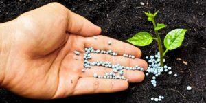 почва, ладонь, саженец, удобрения