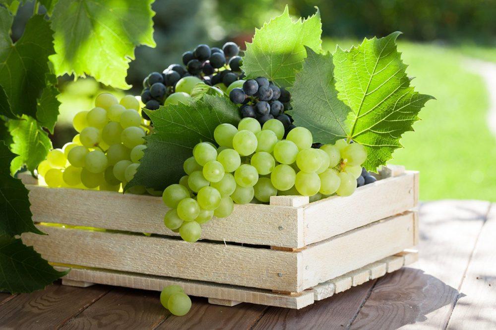 Виноград при подагре