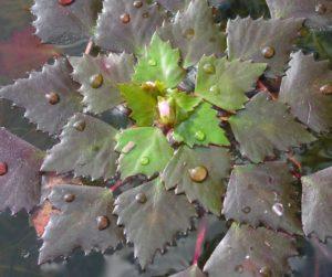 Листья, водоем, капли