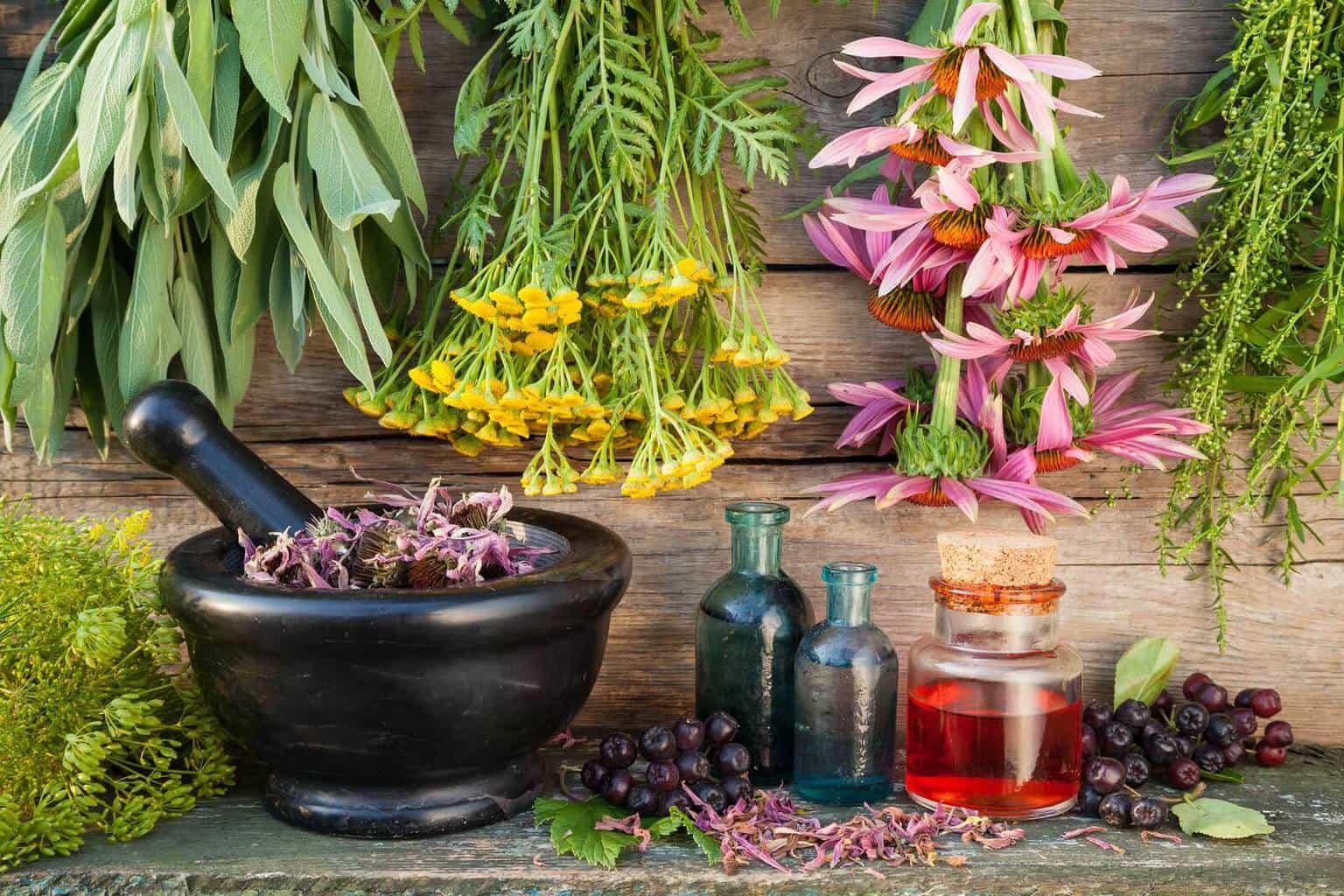 Какие травы пить для желудка и кишечника