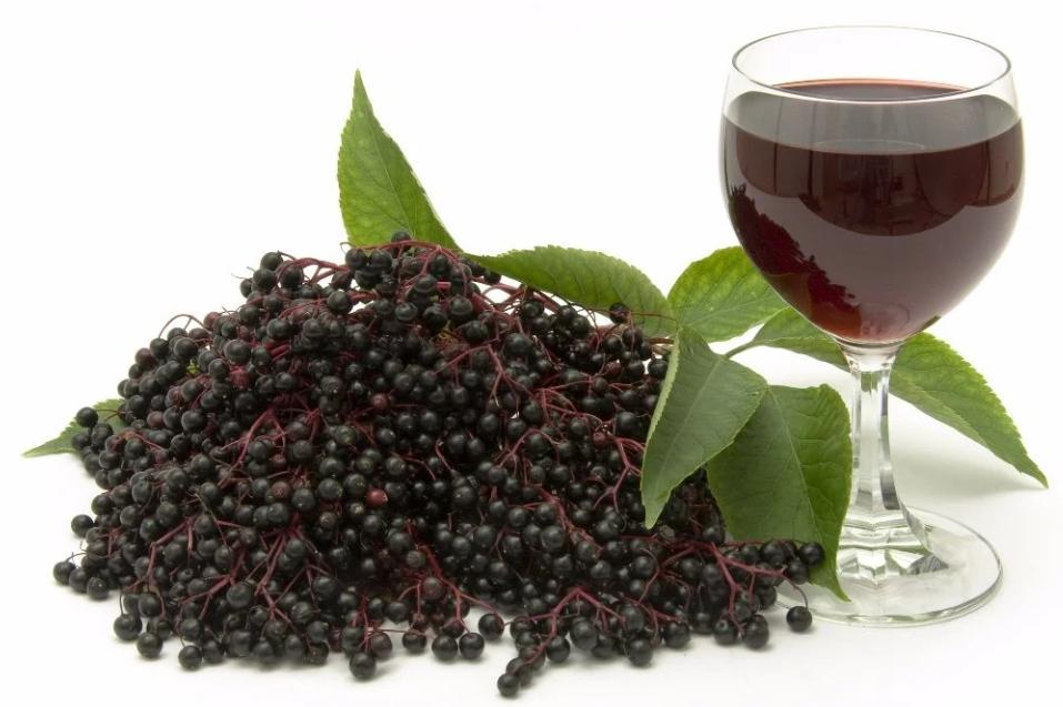 Бузина вино