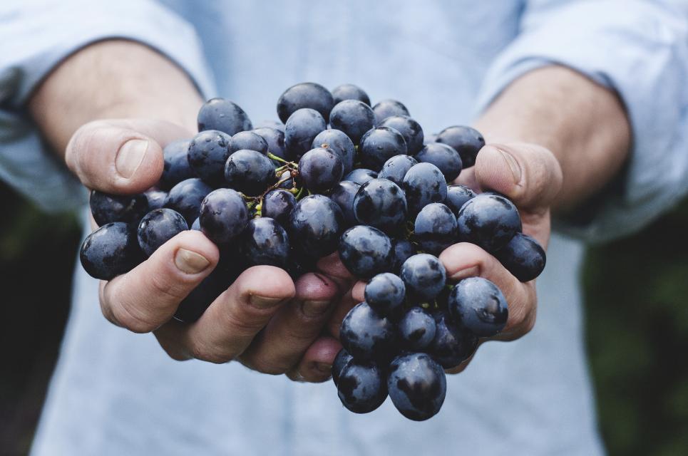 Польза винограда для мужчин