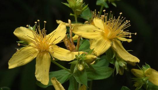 желтые цветы с зелеными листьями
