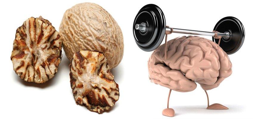 Мускатный орех для мозговой деятельности