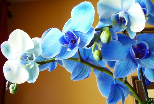 когда лучше пересадить орхидею в домашних условиях